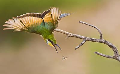 Bee-eater Art Print by Basie Van Zyl