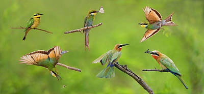 Bee-eater Collage Art Print