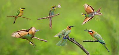 Bee-eater Collage Original by Basie Van Zyl