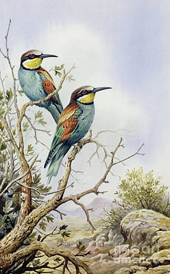 Bee Eaters Print by Carl Donner