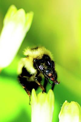 Photograph - Bee Face by Meta Gatschenberger