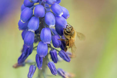 Photograph - Bee Feast 1 by Brian Hale