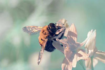 Photograph - Bee Feeding In Infrared by Brian Hale