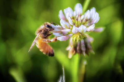 Photograph - Bee Free by Marnie Patchett