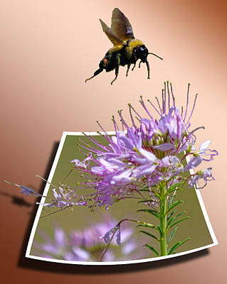 Nature Photograph - Bee Free by Shane Bechler