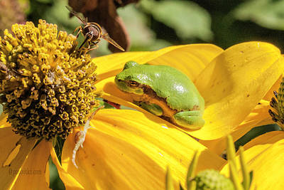 Photograph - Bee Frog Spider.... by Paul Vitko