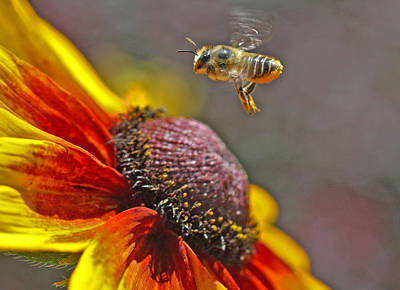 Rust Wall Art - Photograph - bee by Gary Wing