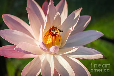 Bee Goodness Art Print