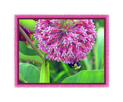 Photograph - Bee Hanging On II by Shirley Moravec