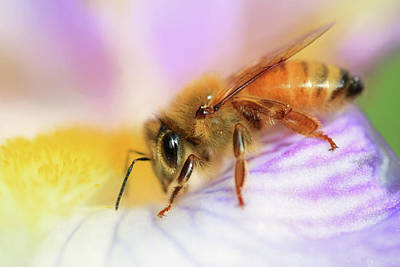 Photograph - Bee Happy by Donna Kennedy