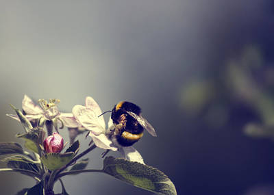 Photograph - Bee Happy by Gabriel Calahorra