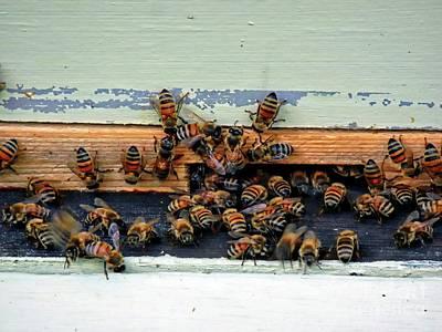 Photograph - Bee Happy by Marcia Lee Jones