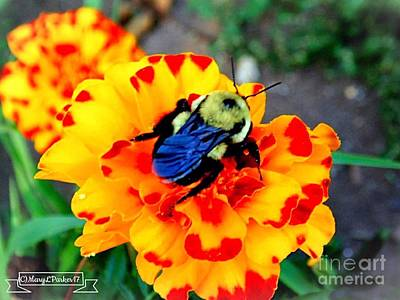 Photograph - Bee Happy   by MaryLee Parker