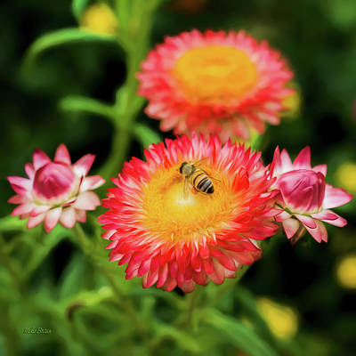 Photograph - Bee Happy by Mike Braun