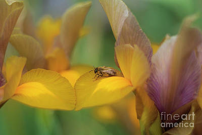 Photograph - Bee Happy by Terri Waters