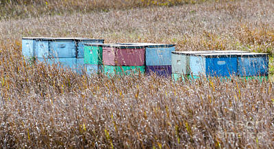Photograph - Bee Hives by Mary Carol Story