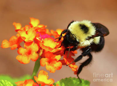 Photograph - Bee Humble by Marty Fancy