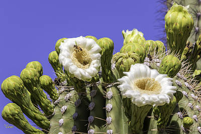 Lenz Wall Art - Photograph - Bee In A Cactus by George Lenz