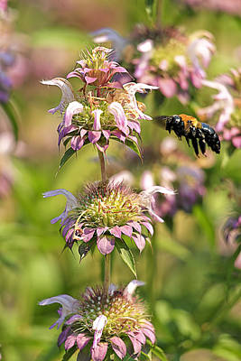 Soap Suds - Bee In Flight by Geraldine Scull