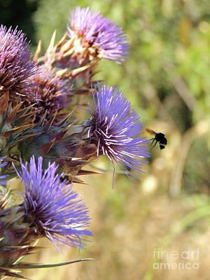 Photograph - Bee In Flight by Robert Ball