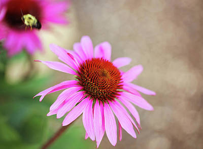 Photograph - Bee In Motion by Sue Collura