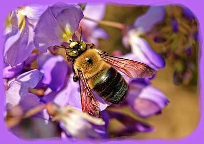 Photograph - Bee In Spring by Susan Leggett