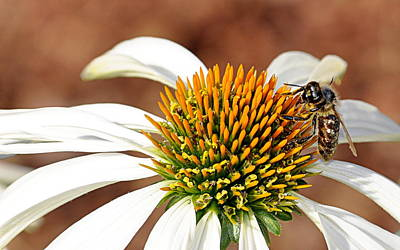Art Print featuring the photograph Bee In The Echinacea  by AJ Schibig