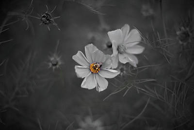 Photograph - Bee In The Fall by Jakub Sisak