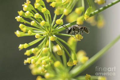 Bee Art Print by Jivko Nakev