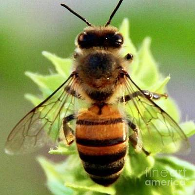 Photograph - BEE by Kim Nelson