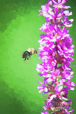 Bee Kissing A Flower Art Print