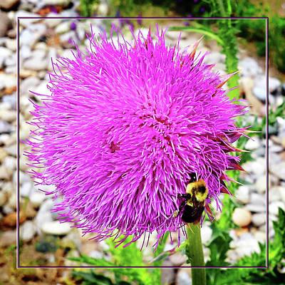 Photograph - Bee Likes Purple by Robert Clayton