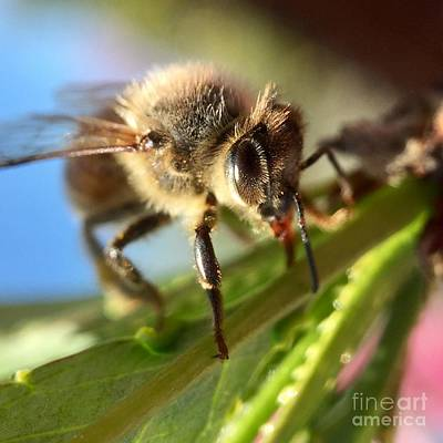 Photograph - Spring Bee by Masha Batkova