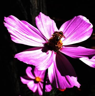 Bee Mine Print by Joseph Frank Baraba