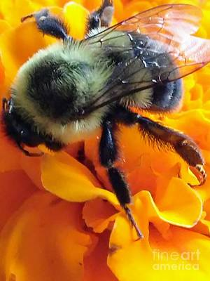 Photograph - Bee Mine by Marlene Williams