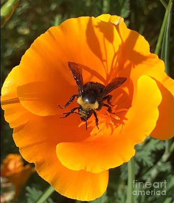 Photograph - Bee My Buttercup by Susan Garren