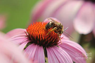 Photograph - Bee N Working Hard by Lori Mellen-Pagliaro