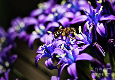 Photograph - Bee On A Flower by Bruce Block