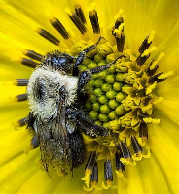 Wall Art - Photograph - Bee On A Yellow Flower by Martin Belan