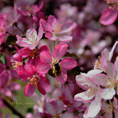 Digital Art - Bee On Apple Blossom by Kae Cheatham