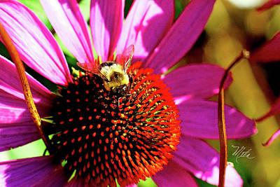 Photograph - Bee On Cone Flower by Meta Gatschenberger