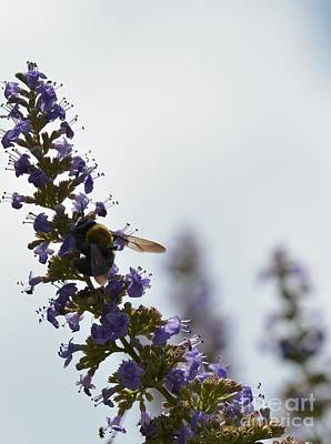 Photograph - Bee On Butterfly Bush by Maria Urso