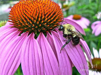 Photograph - Bee On Coneflower by Jean Wright