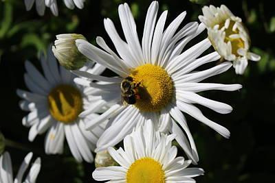 Photograph - Bee On Flower 1 by Jason Nicholas