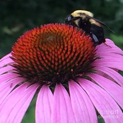 Bee On Flower By Saribelle Rodriguez Art Print