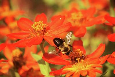Photograph - Bee On Flower by Donna G Smith