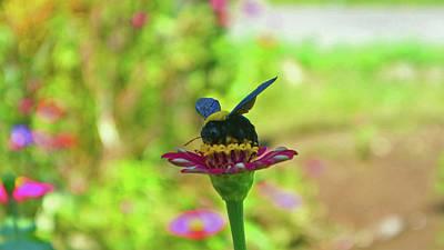 Bee On Flower Original