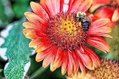 Pollinate Digital Art - Bee On Flower  by Geraldine Scull