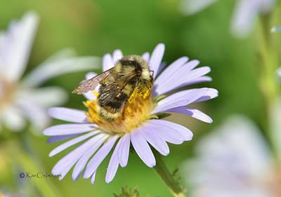 Photograph - Bee On Flower by Kae Cheatham
