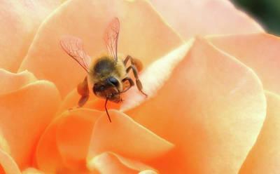 Bee On Flower Art Print by Matthew Bamberg